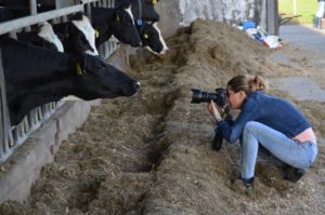 koe, koeienfoto, koe op de foto, fotografie