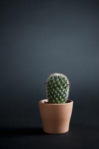 kunst, cactus, art, vrijwerk,